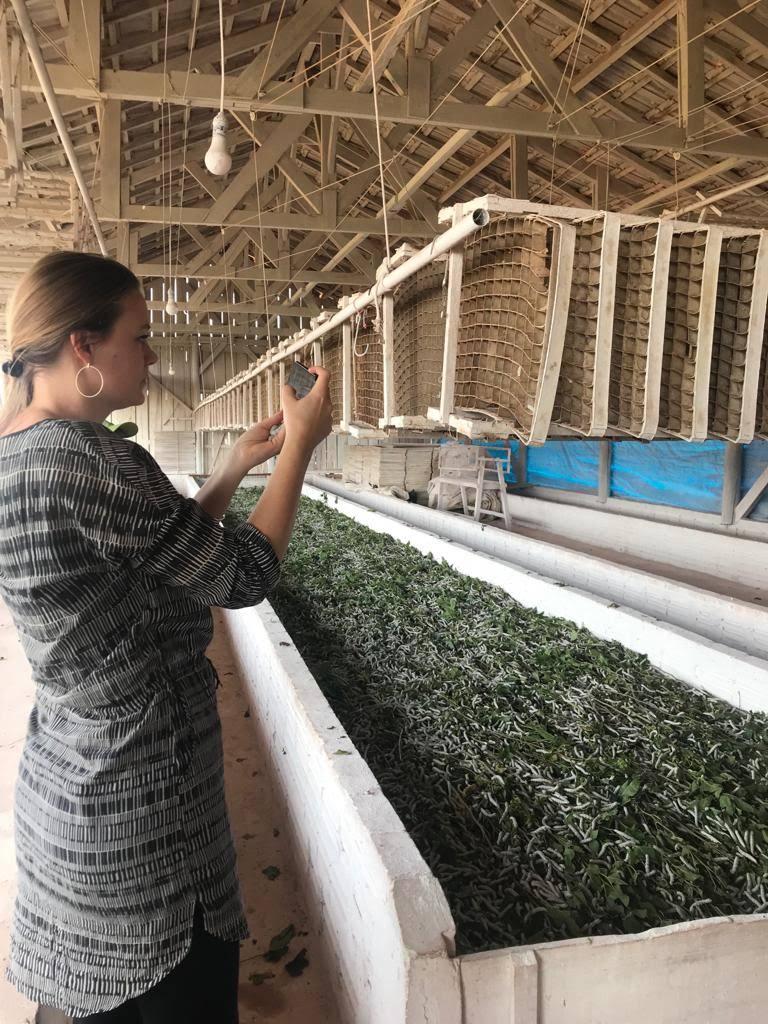 La asesora en economía circular visitó finca de productor de gusanos de seda, empresas y cámaras sericícolas.